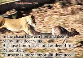 Beautiful Deer Quotes Best of Life Purpose Quotes Inspirational Quotes Pictures Motivational