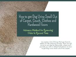 get dog urine smell out of carpet