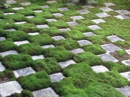 moss gardens | Moss Gardening: How to Grow Your own Moss ...