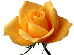 Image result for images of single flowers