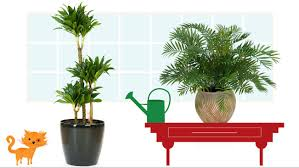 1. The Areca Palm