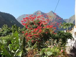 La Gomeraeine Wunderschöne Kleine Insel Mittendrin Ein