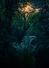 summer outdoors wallpaper. Free Images : Landscape, Tree, Nature, Forest, Branch, Light, Abstract, Plant, Sun, Night, Sunlight, Texture, Leaf, Dawn, Summer, Dark, Dusk, Foliage, Summer Outdoors Wallpaper O