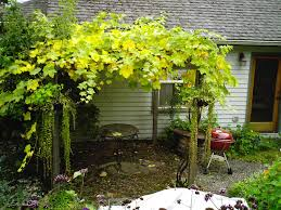 Grape Vine Pergola Simple And Modern Natural Create Elegant Stylish Item  Collection Natiral Gallery Unique Modern Simple