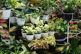 7 materials used for plant containers