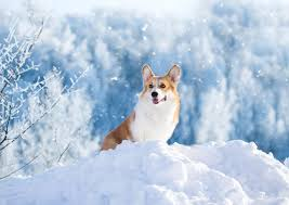 Image result for dogs in winter photos