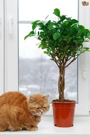 5 Common Houseplants And Flowers That Are Most Toxic To Cats