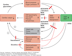 Cardiac Output Flow Chart View Large Accessmedicine Mcgraw Hill Medical