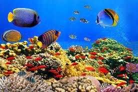 Under Water Wallpapers - Top Free Under ...