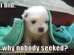 cute kittens and puppies quotes. Wonderful Kittens Funny Cute Kittens In Cute Kittens And Puppies Quotes U