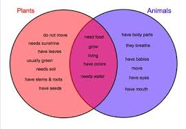 Comparing Animal And Plant Cells Venn Diagram Plant And Animal Cells Compare And Contrast Venn Diagram Free
