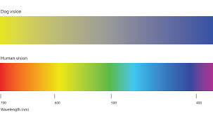 Is My Dog Color Blind Research Backed Article By The