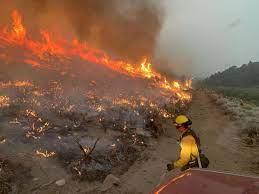 Crews make progress on Tamarack Fire ...