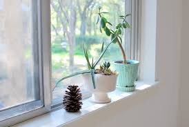 dekoideen windowsill plant home ideas