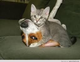 dog and cat love each other. Exellent Other And Dog Cat Love Each Other I