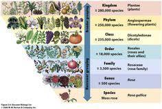 11 Best Classification Chart Images Plant Classification