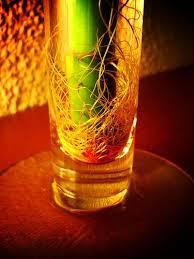 Resultado de imagen de raices bambu japones