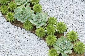 succulents in rock garden