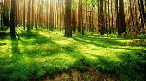 Hd Forest Wallpapers Top Free Hd Forest Backgrounds