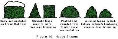 ... figure 10, hedge shapes