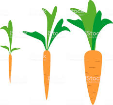 carrot plant stages.  Stages Carrot Growth Stages Royaltyfree Carrot Stock Vector Art  U0026amp More Images To Plant Stages