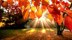 Autumn Trees Wallpapers - Wallpaper Cave