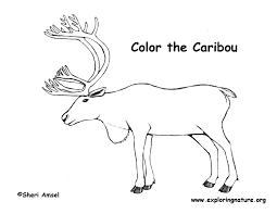 Small Picture Caribou Drawing