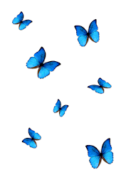 Cute Aesthetic Butterfly Background ...