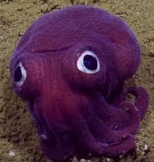 Strange Purple Sea Creatures Found In Deep Ocean Trenches