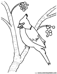 Small Picture Cardinal Coloring Sheet Create A Printout Or Activity