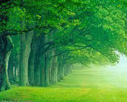 Download Wallpapers Free - Lush Green ...