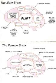 the hardwired difference between male and female brains could differences between male and female brain humor lol