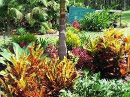 Small Picture Best 20 Australian garden ideas on Pinterest Australian garden