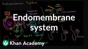 Endomembrane System Flow Chart Endomembrane System