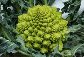 Image result for image of broccoflower
