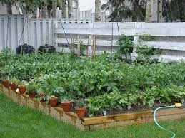 Small Picture Small Backyard Vegetable Garden Ideas decorating clear