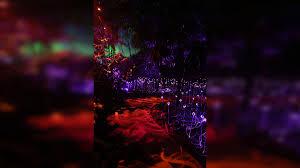 the gardens come to life at night at fairchild tropical botanic gardens nbc 6 south florida