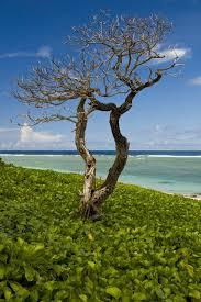 29 Guam ideas   guam, territories of the united states, beautiful ...