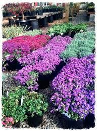 garden nurseries near me. Garden Nursery Planting Instructions Soil Prep Care After Near Me Now . Nurseries