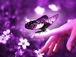 Beautiful Butterfly Wallpapers - Top ...