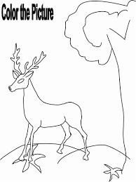 Deer Drinking Water Drawing