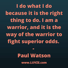 Warrior Quotes Gorgeous 48 Inspirational Warrior Quotes And Sayings