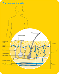 Mole Chart For Skin Cancer Skin Cancer Overview Cancer Council Victoria