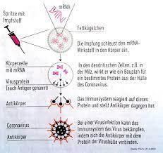 Wie wirkt der mRNA-Impfstoff?