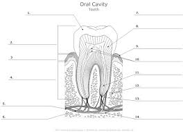 It will be capable to supply you with further equipment like. Gc 2686 Unlabeled Anatomy Diagrams Wiring Diagram