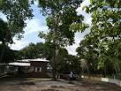 imagem de Palmeirante Tocantins n-16