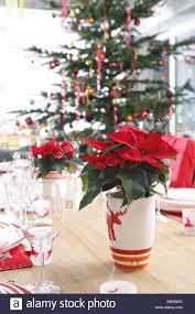 Tisch Weihnachtsstern Brille Weihnachtsbaum Dekoriert