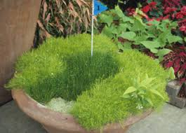 container gardens. Container Gardening Whimsy Gardens