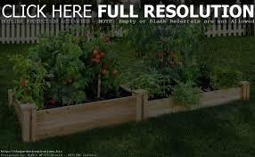 raised gardening for beginners dummies home outdoor decoration vegetable garden plans the