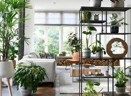 Kamerplanten Voor In De Woonkamer Intratuin